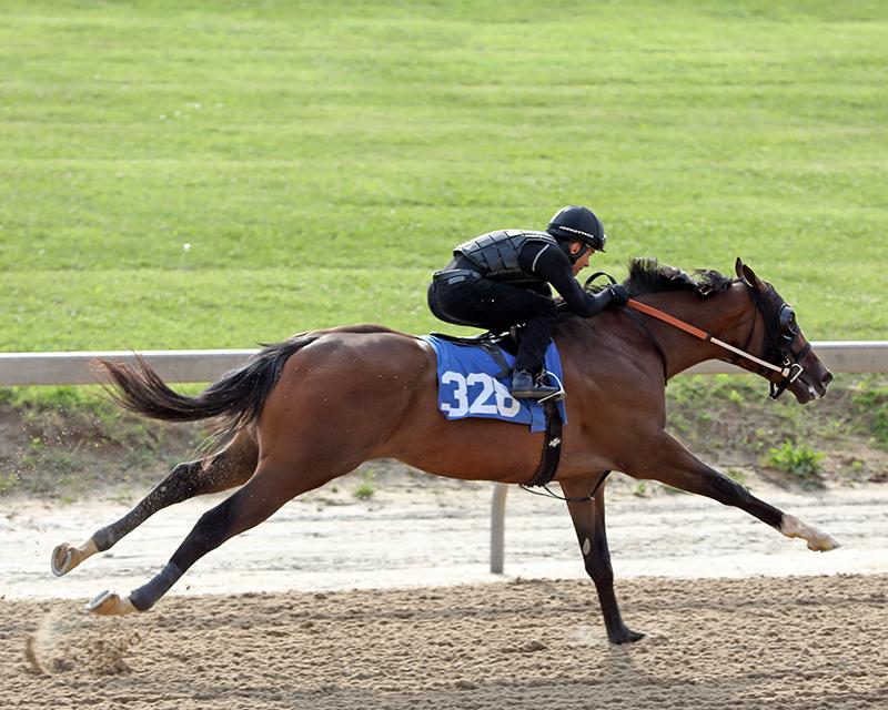 $300,000 Tapiture 2yo among top colts at Midlantic sale