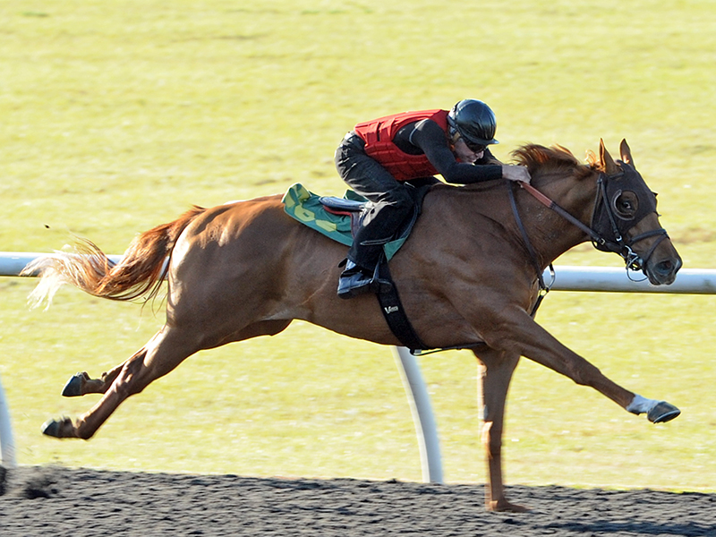 Speedy Klimt colt brings $225,000 at OBS 2yo sale