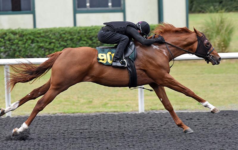 $310,000 colt in the spotlight for Klimt Thursday at OBS sale