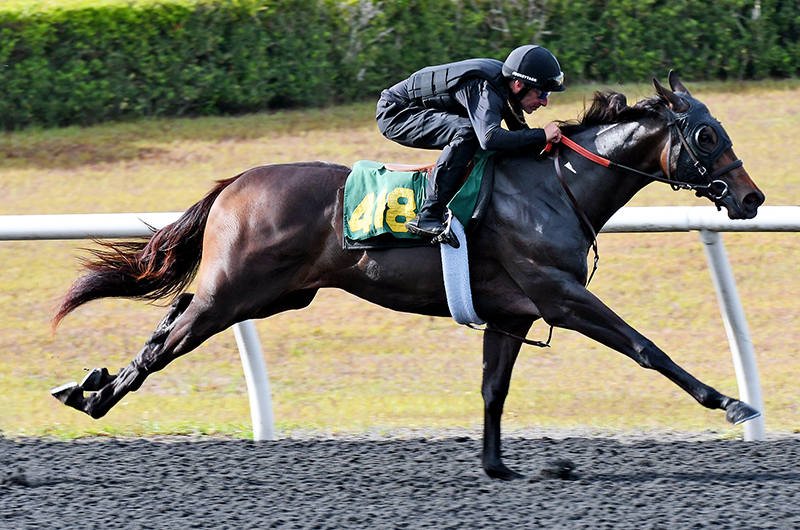 $350,000 Dialed In filly goes to familiar connections