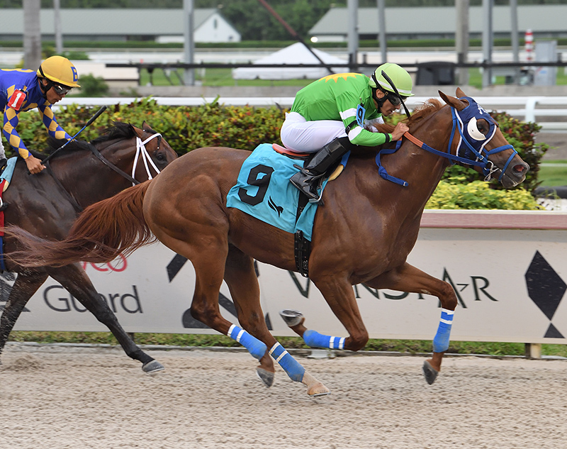 Papetu the second stakes winner of the week for Dialed In